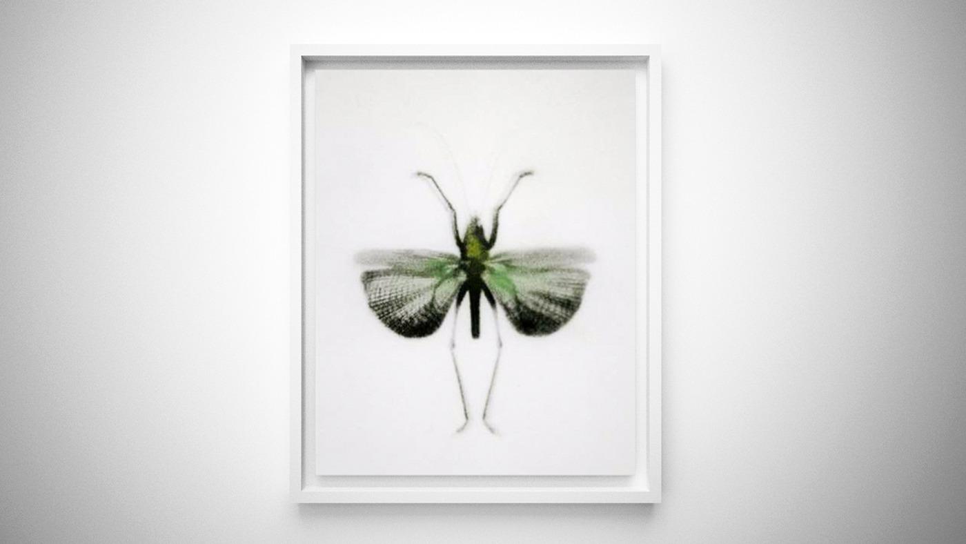 Collezione di insetti